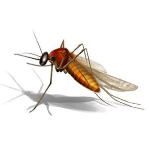 hochu-vsjo-znat-komar-pischit-krylj_1